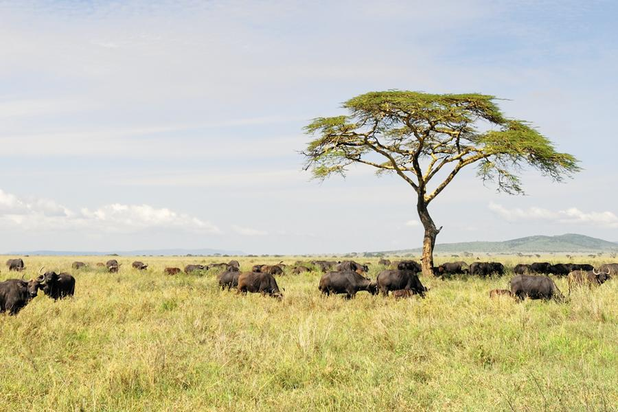 Kenia – Tansania – Rendezvous mit den Big Five